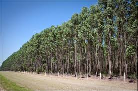 Paper Keeps Forests as Forests